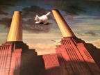 Cats on the Wing