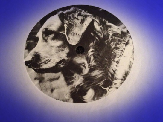 Dog on Polly Wog label