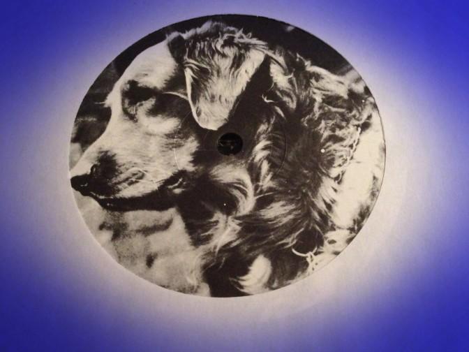 Dog on Polly Wog label