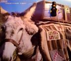 Cool Mule