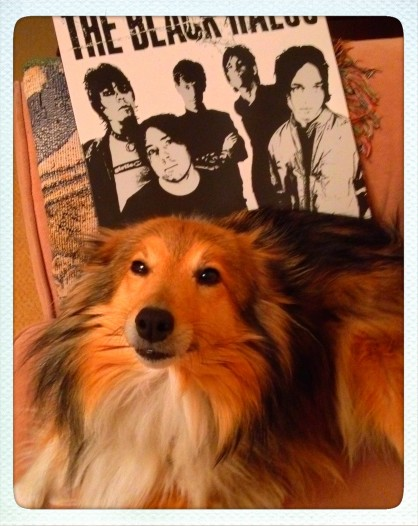 Grim urban reality#1: Packs of rabid feral dogs
