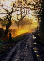 Walking the dog this morning, I haven't messed about with the colours at all - I love that winter light!