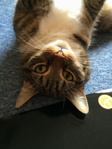 Fun Lovin Criminals Come Find Yourself 09a