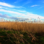 Nature's nice and stuff, but it's no 1200 word review of an obscure hardcore LP, is it?