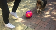 World Cup fever grips the 1537 household